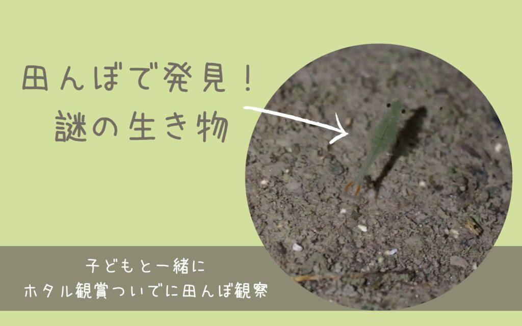 田んぼで発見した謎の生き物